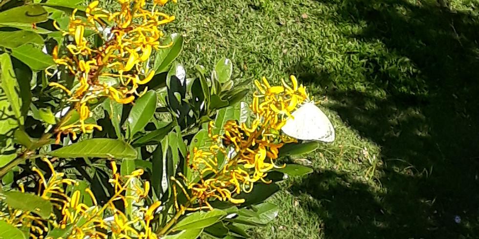 Jardim Sensorial - Mata Atlântica - Segunda-feira