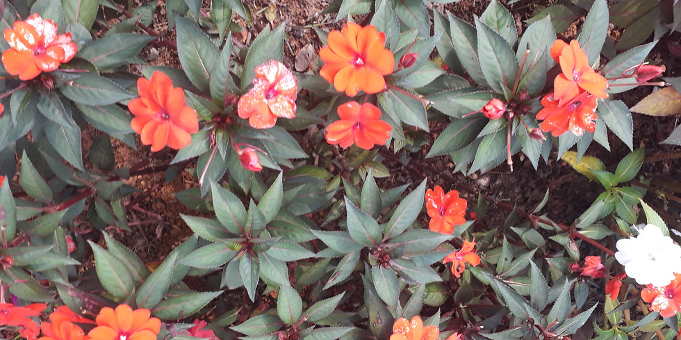 Jardim Sensorial - Mata Atlântica - Quarta-feira