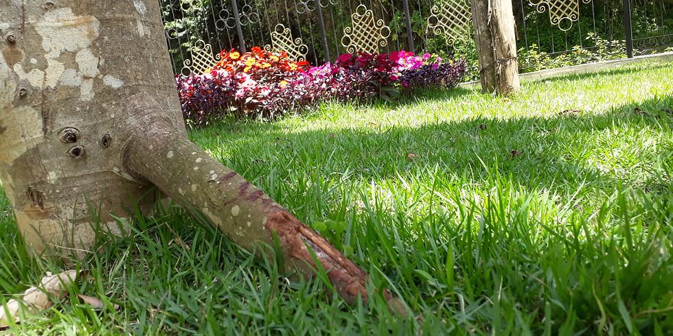 Jardim Sensorial - Mata Atlântica - Terça-feira