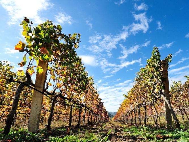 Wine2Wine, cresce l'export delle cantine