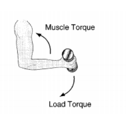 Muscle and Load Torque