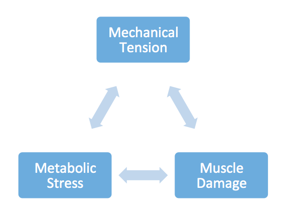 Methods of muscle growth