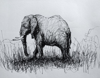 """Elephant, 2016, Ink on paper, 7""""x10"""""""