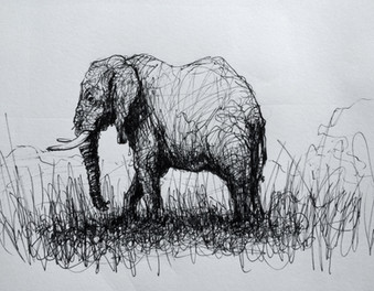 "Elephant, 2016, Ink on paper, 7""x10"""