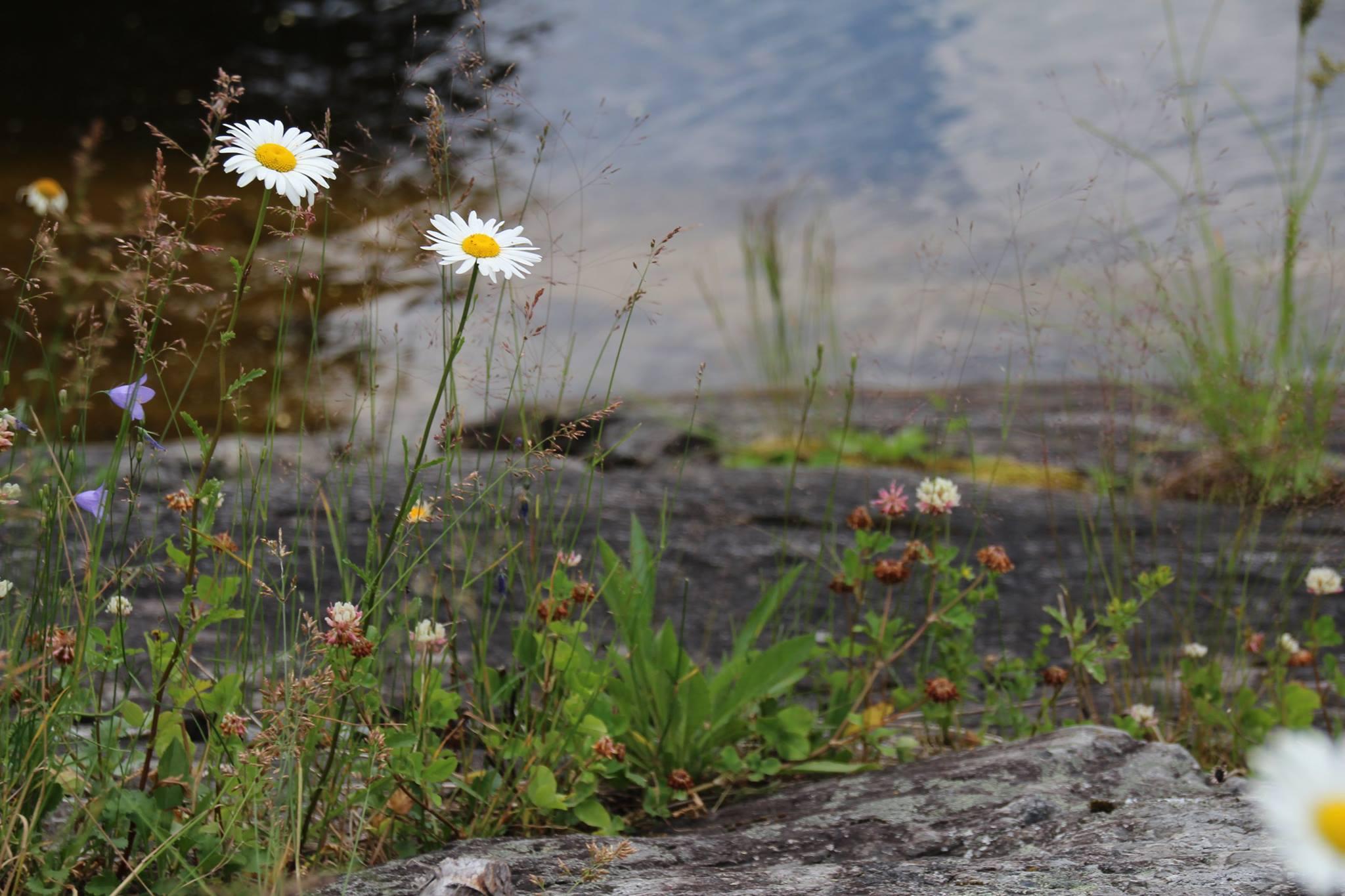 A shoreline scene