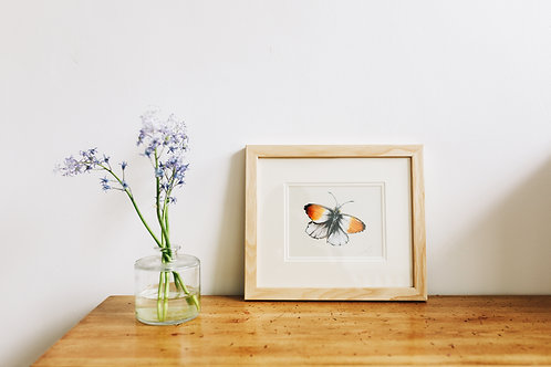 Original Painting | Orange Tip Butterfly
