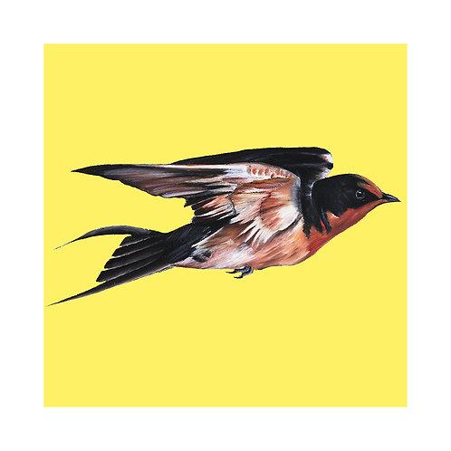 Swallow | Hirundo rustica