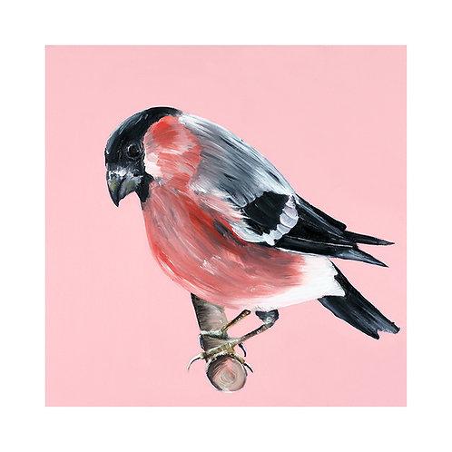 Bullfinch | Pyrrhula pyrrhula