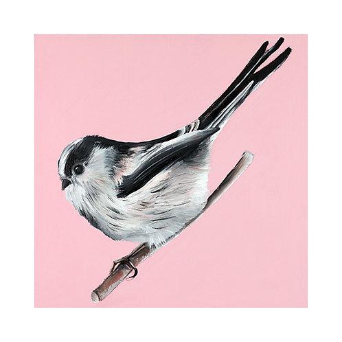 Long tailed Tit | Aegithalos caudatus