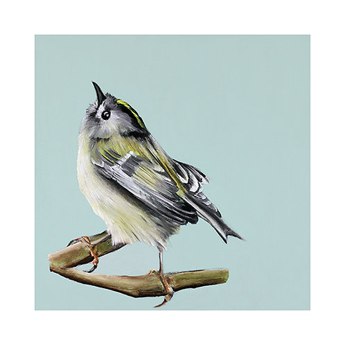 Goldcrest bird print
