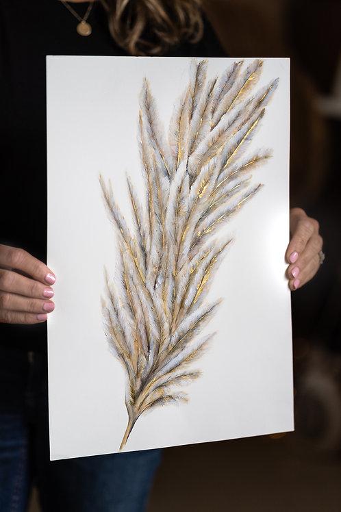 Pampass Grass | Cortaderia Selloana