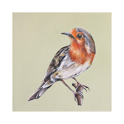 Robin | Erithacus rubecula