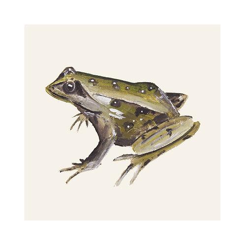 Frog | Rana Temporaria