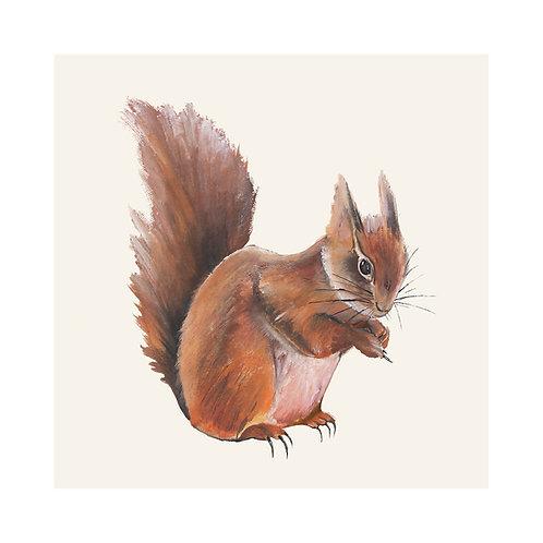 Squirrel | Sciurus Vulgaris