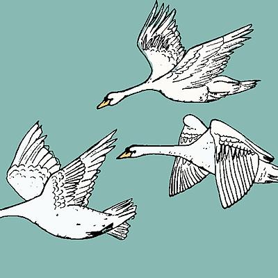 Dollybirds Art Look Book