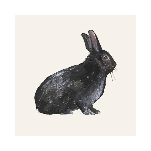 Black Rabbit | Oryctolagus cuniculus