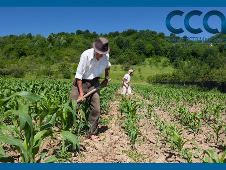 Aposentadoria do trabalhador rural! Conheça os requisitos, possibilidades e impedimentos.