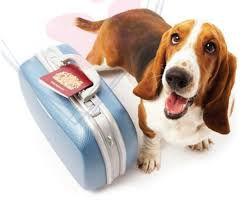 dog boarding.jpg