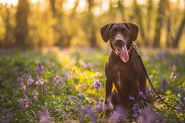 Dog portrait, link to Pet gallery