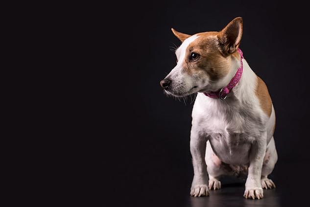 Pets (50).jpg