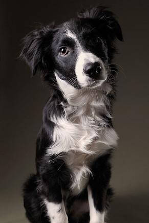 Pets (47).jpg