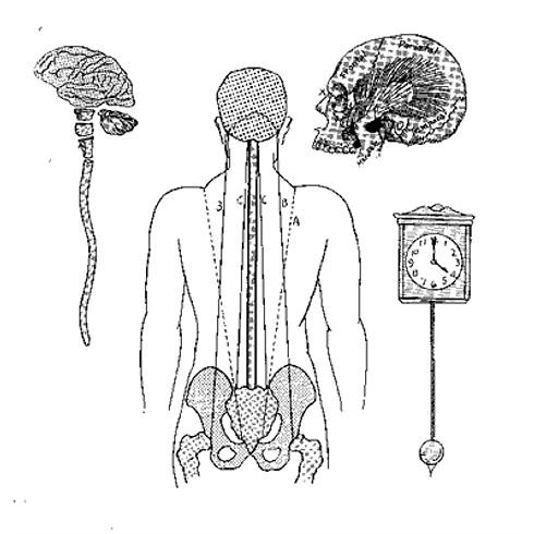Cranial Anatomy & Listening Skills II MOD B LIVESTREAM (8 hrs) - 💻 ONLINE