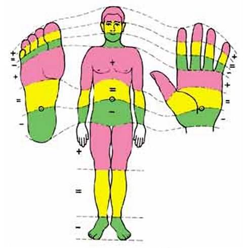 Polarity Reflexology (20 hrs) - 🤲 IN PERSON