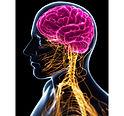 Cranial Autonomic Nervous System.jpg