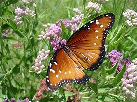 butterfly-1392408.jpg