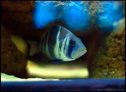 Fish2_SergeyGreyCom.jpg