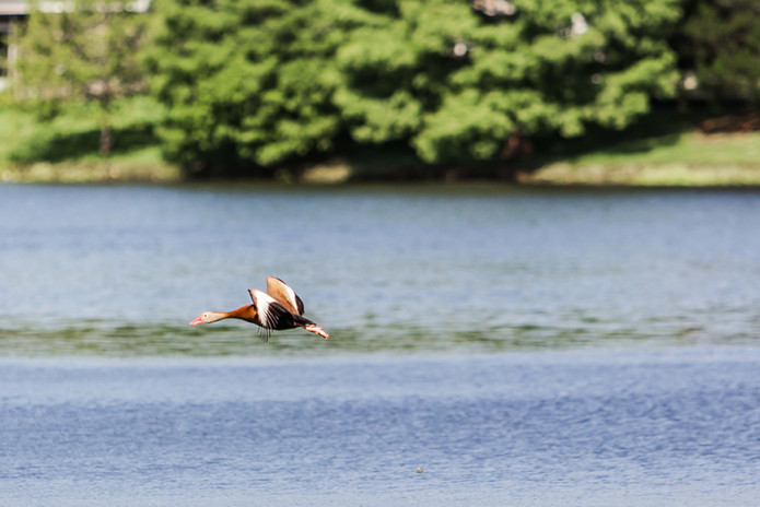 Discover Lake Jackson 12.jpg
