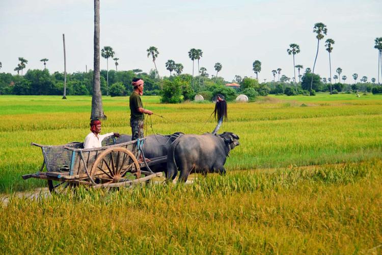 peter-alan-lloyd-back-novel-cambodia-khm