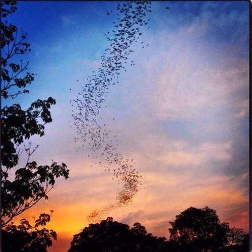 battambang-bat-caves.jpg