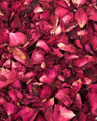 Roses_scattered__11017.1503593388.jpg