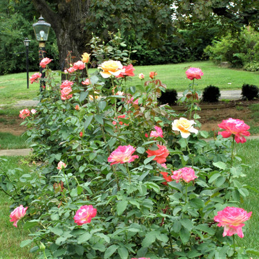 Garden of Shirley Dowdy
