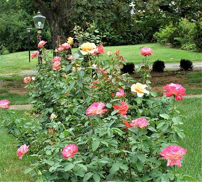 LC18 - Garden of Shirley Dowdy.jpg