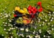 shopping-cart-2291274.jpg