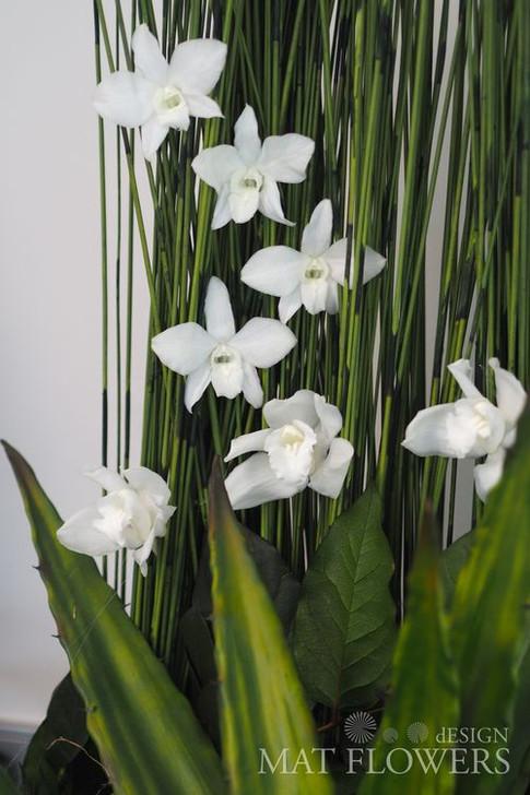 kvetiny_stabilizovane_0199.JPG
