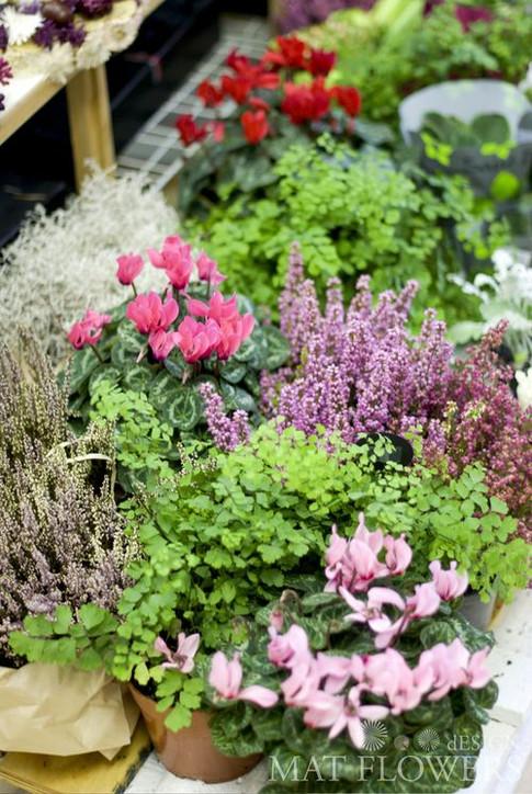 kvetiny_podzimni_dekorace_0117.jpg