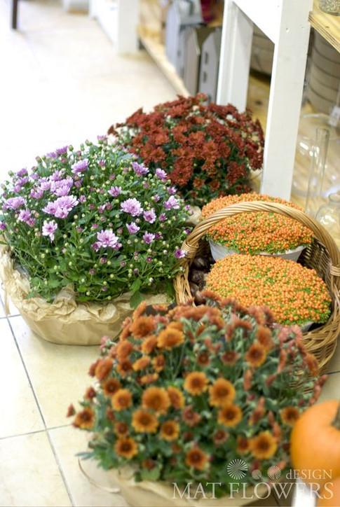 kvetiny_podzimni_dekorace_0138.jpg
