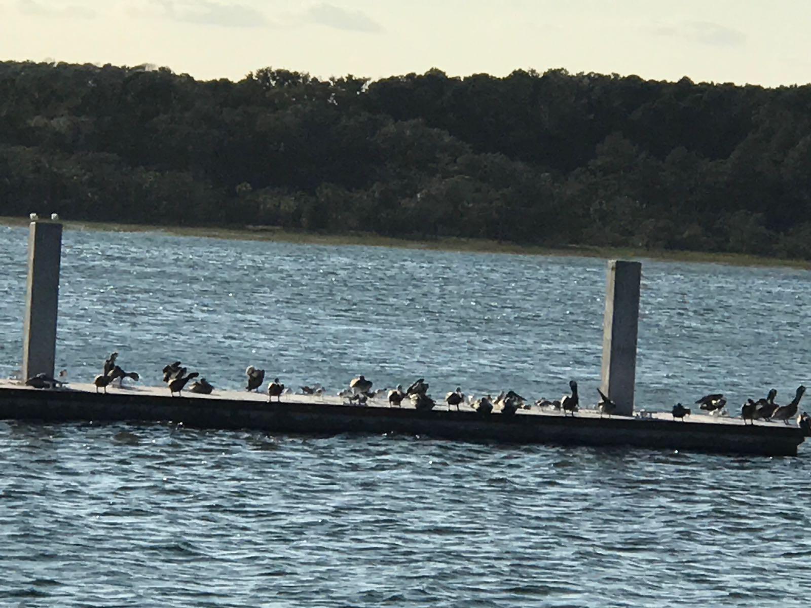 Skull Creek Marina, Carolina de Sur, (USA) sin el StopGull Falcon