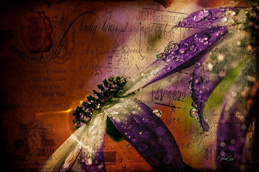 Dayse, flower