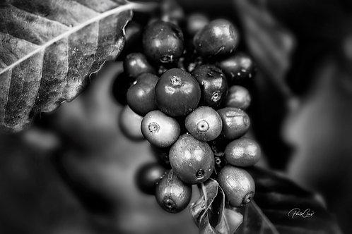 Coffee Beans B&W