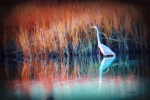 Egret at Golden Hour
