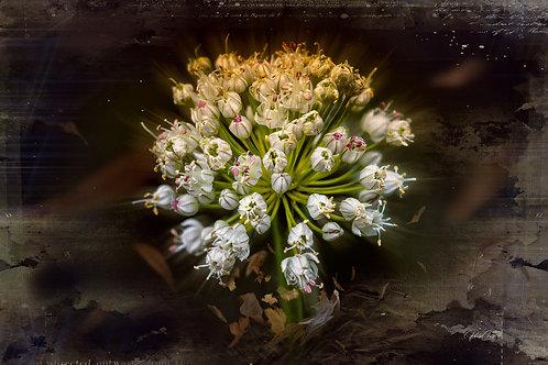 Grunge Onion Flower