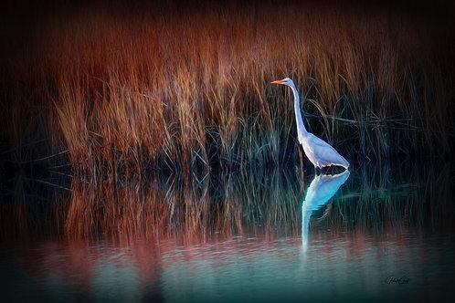 Egret at Golden Hour