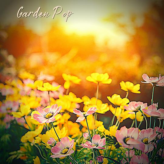 Garden Pop