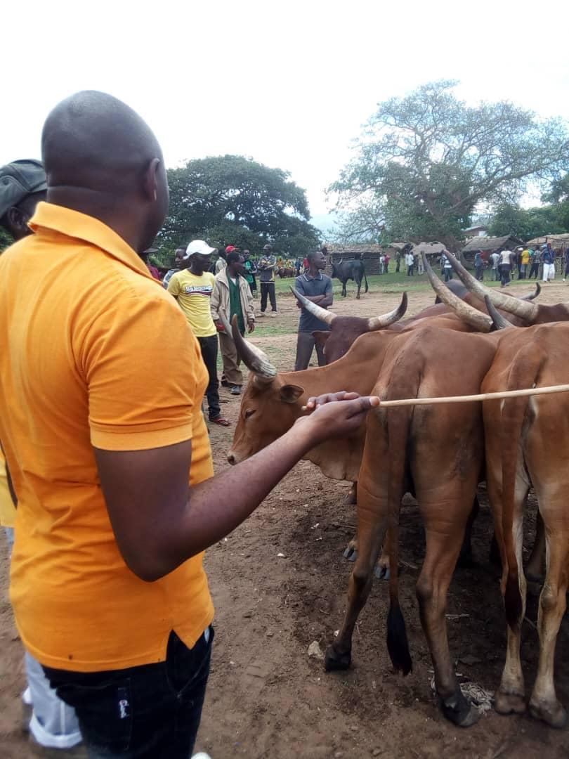 Naluvumbu vendant les vaches pillées