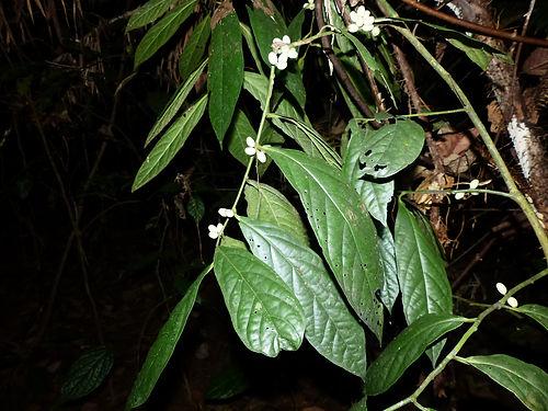 wild herb.JPG