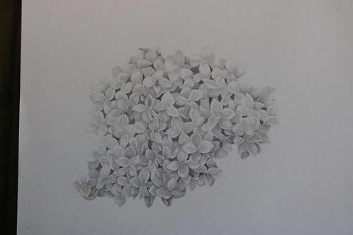 Hydrangea macrophyllum 'Gypsyii'  by Nancy Elizabeth Saltsman